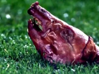Свинная голова для Луиша Фигу фото